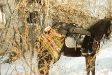 ФОТОпробы. Конная прогулка. Фото Илья Матушкин