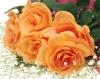 Интернет-магазины цветов и подарков